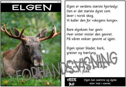 Faktatekster i 3 nivåer om dyrene i norsk natur. Oppgaver til leseforståelse følger med. Arbeid med truede dyrearter og norske rovdyr.